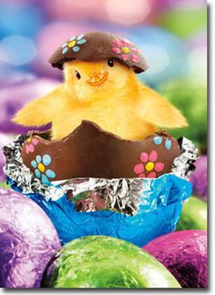 Chick In Foil Wrapped Egg Funny Easter Card - Greeting Card by Avanti Press for sale online Happy Easter Quotes, Happy Easter Wishes, Funny Easter Bunny, Cute Baby Bunnies, Happy Easter Pictures Inspiration, Cute Animal Pictures, Easter Crafts, Easter Card, Greeting Card