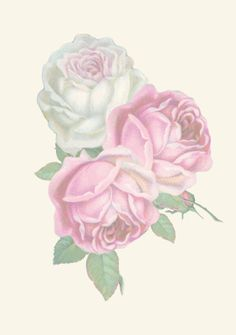 Free printable vintage rose stationery - ausdruckbares Briefpapier - freebie   MeinLilaPark – DIY printables and downloads