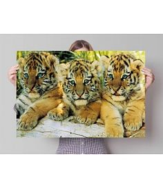 Tiger Cubs Photographic Print Decorative Plaque East Urban Home Painting Frames, Painting Prints, Canvas Prints, Frames On Wall, Framed Wall Art, Tier Fotos, Cute Home Decor, Urban, Leonid Afremov Paintings