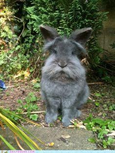 Gray Hare