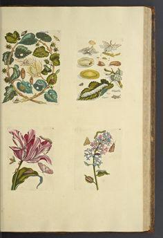 De Europische insecten / - Biodiversity Heritage Library