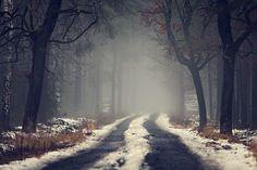 Photograph Misty forest by Lukasz Malkiewicz on 500px