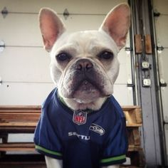 89a5702450b 25 Best Seahawks - 12th Dog! images | Seattle Seahawks, Seahawks ...