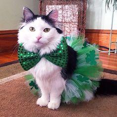 Una preciosura en verde   #PetsWorldMagazine #RevistaDeMascotas #Panama #Gatos #GatosPty #Mascotas #MascotasPty #MascotasAdorables #SuperTiernos #PicOfTheDay #Cats #CatLover #catoftheday #InstaLove #InstaPets #Cute