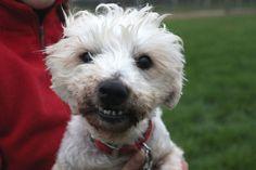 Check out that smile! Tom cerca casa! info: adozioni@leudica.org / ADOTTATO / ADOPTED! :)