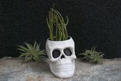 DIY Skull Planter