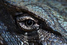 dragon eye of indigo blue by paloetic, via Flickr
