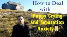 How to Deal With Puppy Crying and Separation Anxiety - Dog Training Nibb...