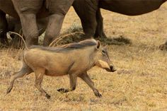 South Africa-Wildlife