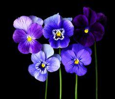 Violet nature.