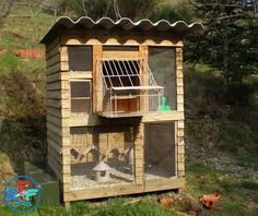 Pigeon loft design ideas and pigeon loft plan Backyard Chicken Coops, Chickens Backyard, Cute Pigeon, Pigeon Loft Design, Racing Pigeon Lofts, Pigeons For Sale, Pigeon Cage, Pigeon House, Dove House