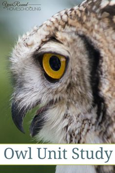 Owl Unit Study -