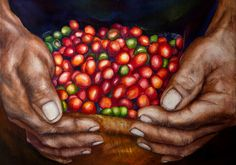 An amazing painting by Mayra Klée showing the rugged hands of a coffee farmer holding fresh picked coffee beans