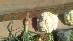 Productos de los huertos ecológicos Valencia, Cauliflower, Vegetables, Veggie Gardens, Products, Cauliflowers, Vegetable Recipes, Veggie Food, Veggies