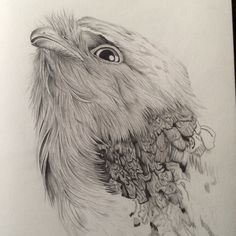 Tawny frogmouth pencil on paper Australian birds