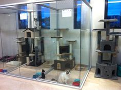 -Repinned- Abba Boarding Kennels & Cattery Dandenong South, VIC