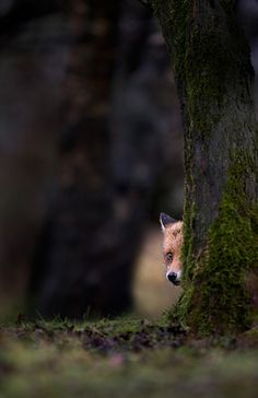 The Shy One  by Mark Davies, via 500px