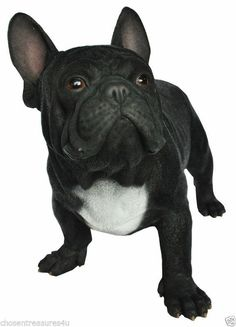 French Bulldog Dog Standing  Statue