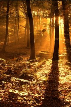 Sunbeams through the forest. Hd Widescreen Wallpapers, View Wallpaper, Mellow Yellow, The Great Outdoors, Beautiful Places, Beautiful Scenery, Beautiful Gardens, Nature Photography, Sunrise