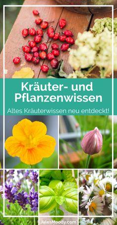 Altes Kräuterwissen neu entdeckt - viele verschiedene Pflanzen und Rezepte!