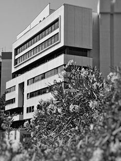 Ancona, Marche, Italy - Building 2- by Gianni Del Bufalo CC BY-NC-SA | Palazzo in Ancona - DSC01083