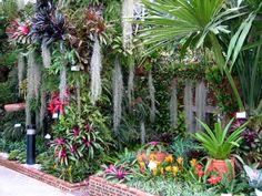 Tropical garden with beautiful bromeliads