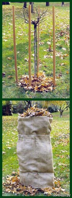 (960) Pinterest.. how to winterize your young trees and keep the deer from eating them..