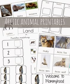 Alligator themed toddler and preschool activities Preschool activities: Montessori inspired arctic unit and FREE printables {Welcome to Mommyhood} Animal Activities, Winter Activities, Preschool Activities, Montessori Science, Preschool Winter, Artic Animals, Penguins And Polar Bears, Arctic Tundra, Animal Habitats