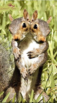 Squirrel hugs...  This pic just made my day! ❊