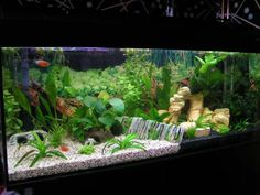 How to Decorate Your Boring Fish Tank   Pinterest   Fish tank ...