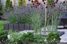 Lawendowy zawrót głowy - strona 661 - Forum ogrodnicze - Ogrodowisko