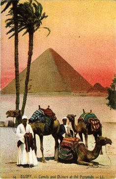 "Another year older, but not as old as the Sphinx, yet. Here is a vintage postcard that I received entitled ""Egypt – Camels and Drivers at the Pyramids""."