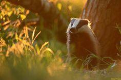Zum Sonnenuntergang... von Wildlifefotografie Eike Mross
