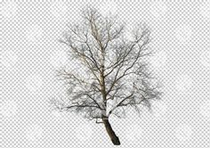 Winter broadleaf tree cutout by Gobotree