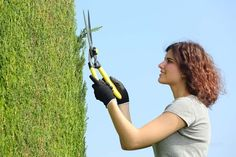 Younger femaile prunes hedge with clippers