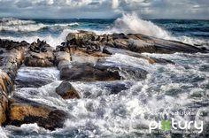 Seal Island, M. Bastianello