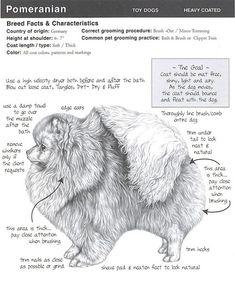 Poms How-To #Pomeranian