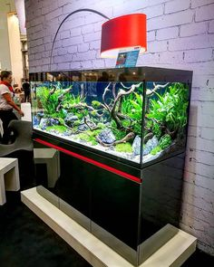 42 Astonishing Aquarium Design Ideas For Indoor Decorations - An aquarium is an enclosure with at least one clear side that houses water-dwelling fish, plants and other livestock and decorations. An aquarium offe. Vivarium, Paludarium, Tropical Fish Aquarium, Aquarium Fish Tank, Planted Aquarium, Aquarium Landscape, Nature Aquarium, Aquarium Design, Aquarium Stand