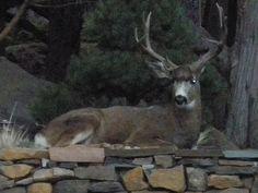 Backyard pet!
