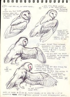 Bird Anatomy Artworks 29 New Ideas : Bird Anatomy Artworks 29 New IdeasYou can find Anatomy and more on our website.Bird Anatomy Artworks 29 New Ideas : Bird Anatomy Artworks 29 New Ideas Bird Drawings, Animal Drawings, Drawing Animals, Owl Art, Bird Art, Animal Sketches, Drawing Sketches, Owl Sketch, Wings Drawing