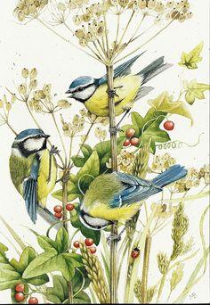 Illustration of flowers and birds   Marjolein Bastin   Illustratie / tekening van bloemen en koolmezen   #birds #drawing