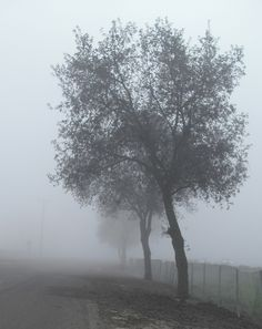 Foggy day in the south valley (central California)  LOVE THE FOGGY DAYS IN THE WINTER HERE !!