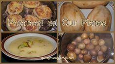 Potatoes by Angie Ouellette-Tower for godsgrowinggarden.com photo 2013-10-13_zps3f0bd380.jpg