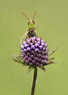 confused grasshopper