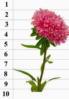 Montessori Kindergarten, Preschool Math, Hands On Activities, Activities For Kids, Primary Classroom, Flower Template, Sensory Bins, Fall Flowers, Spring