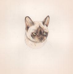 Cat Illustrations by Sarah McNeil.