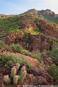 Superstition Mountains along the Apache Trail, Tonto National Forest, near Phoenix, Arizona