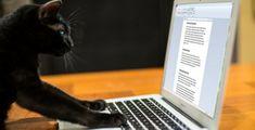 Iedere ondernemer zou zijn eigen boek 📕 moeten schrijven ✍.  Voor ondernemers is een eigen boek een zeer waardevol bezit! Het is een fantastisch visitekaartje…. en niet zomaar een visitekaartje, een visitekaartje dat geld produceert 💶 en geen geld kost! Cats, Animals, Money, Gatos, Animales, Animaux, Animal, Cat, Animais
