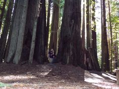 Northern California * Avenue of the Giants * MnEm * March 11, 2014
