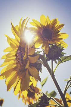 Sunflower Under Blue Sky Mindfulness Meditation, Guided Meditation, Sunflower Images, Feedback For Students, Chakra System, Spiritual Wellness, Online Yoga, Short Break, Happy Summer